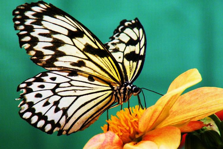 broderie diamant papillon